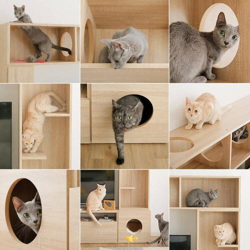 ロウヤのテレビ台猫の特徴